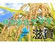 株式会社ヤマダ(近江米)
